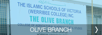 home_campus_olive